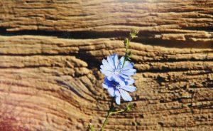Muzeul Astra: Beneficiile plantelor și istoria fotografiei