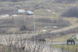 Poliția Locală a dat amenzi în valoare de 21.200 lei
